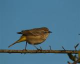 Bird on a Twig.jpg