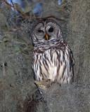 Owl in the Moss.jpg