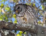 Barred Owl Talons.jpg