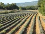 Southern France... Provence - 9/10/14