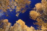 Mono Lake, CA - 10/31/15