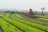 Fields east of Hanoi