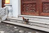 Free range chickens, Hanoi