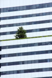 Lonely tree, Pacwest Center, Hugh Stubbins & Associates, Skidmore, Owings and Merrill, Portland Oregon