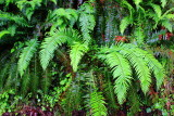 Fern gully, Columbia River Gorge National Scenic Area, Oregon