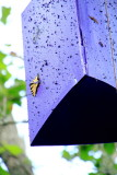 Butterfly breeding, Mammoth Cave National Park, Kentucky
