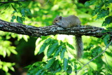 Squirrel, Heritage Trail, Mammoth Cave National Park, Kentucky