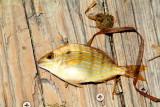 Fish, Biscayne National Park, Florida