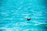 Cormorant, Biscayne National Park, Florida
