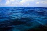 Biscayne Bay, Biscayne National Park, Florida