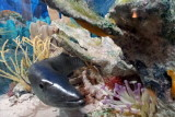 Model of the Florida reef, Biscayne National Park, Florida