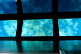 Glass bottom boat tour, Biscayne National Park, Florida