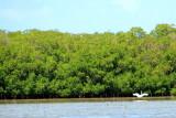 Egret, John Pennekamp Coral Reef State Park, Florida Keys