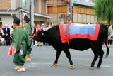 Cow, Toyotomi family (1568 - 1600), Jidai Matsuri Festival, Kyoto, Japan