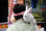 Rabbit, Kyoto, Japan
