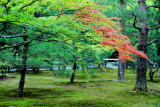 Fall, Rokuon-ji Temple, Kinkaku-ji,  Kyoto, Japan
