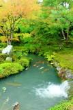 Waterfalls, fish, garden, Tenryū-ji, Arashiyama, Kyoto, Japan