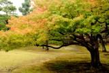Ninomaru Garden, fall, Nijo Castle, Kyoto, Japan