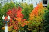 Lamp in Fall, Millennium Park, Chicago, Illinois