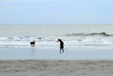 Frisbee with dog, Coligny beach, Atlantic Ocean
