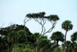 Trees, Shipyard Plantation