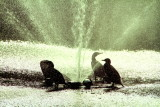 Chilling out cormorants