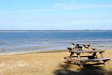 Harbour Town beach