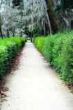 Pathway, Middelton Place