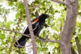 Bird, Chicago, Illinois