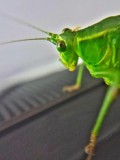 Grasshopper, Summer 2014