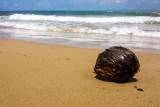 Cococnut, beach, Rio Grande, Puerto Rico