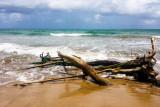Wood, Beach, Rio Grande, Puerto Rico