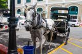 Horse ride, Old San Juan