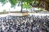 Parque de las Palomas, Pigeon Park, Old San Juan