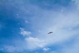 Bird above Old San Juan