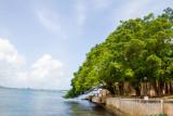 Trees over San Juan Bay, Old San Juan