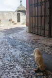 Cats of Old San Juan, entering through San Juan Gate