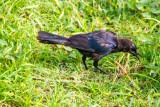Bird, Old San Juan