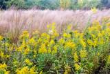 Flower, macro, Barrington Park, Illinois