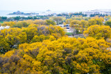 Museum Campus view from the Presidential Suite, Blackstone Hotel, Fall Colors, Chicago Open House 2014