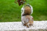 Squirrel, Grant Park, Chicago, IL