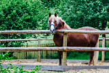 Horse, Open-air Museum, Gutach, Black Forest, Germany