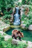 Bear, Alpenzoo, Innsbruck, Austria