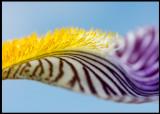 Lily - Grönhögen