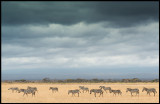 Rainclouds over Amboseli