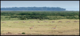 1 second of a Cheetas hunt (10 frames/s) - Amboseli NP