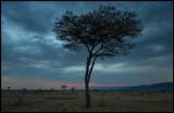 Masai Mara dusk