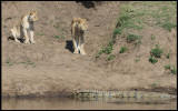 Mara River - not always good for a drink and a bath....