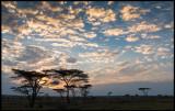 Masai Mara dawn