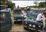 Martin and Wilderbeest chaos near mara River